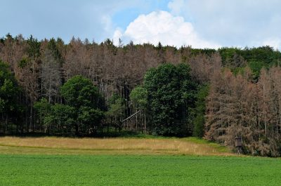 Waldsterben am Teuto
