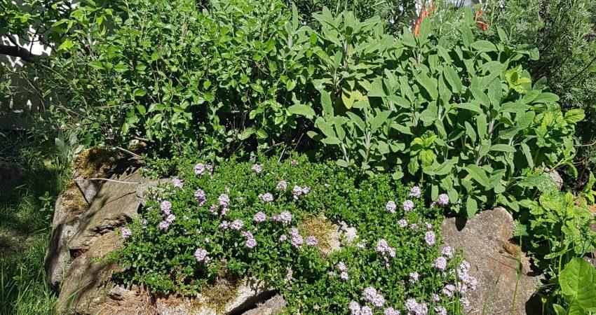 Foto eines bunt gestalteten Gartens